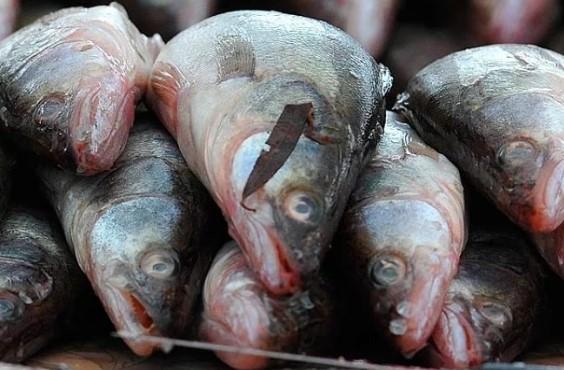 Свежая рыба.