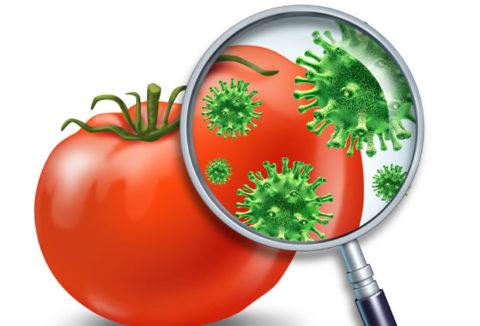 Всегда нужно мыть овощи и фрукты перед тем как съесть их1