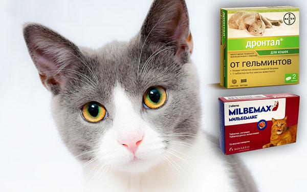 Кот и лекарства