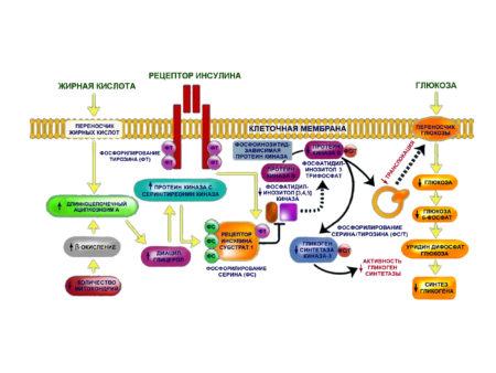 Можно ли есть пельмени с различной начинкой при диагнозе сахарный диабет 2 типа, выбор продуктов, гликемический индекс