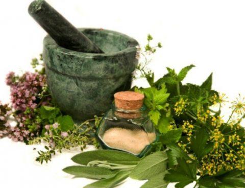 Будьте осторожны: лекарственные травы имеют противопоказания