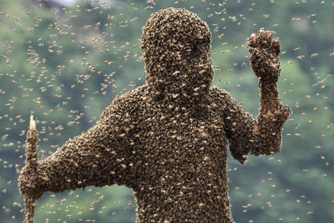 Многие пчеловоды абсолютно спокойно сосуществуют с пчелами