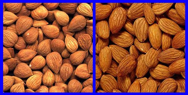 Отличия абрикосовой косточки и миндального ореха