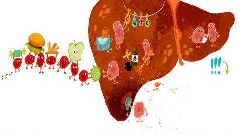 Гепатит С токсический разрушает клетки печени