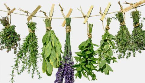 Вывести токсины помогут знакомые каждому лекарственные травы.