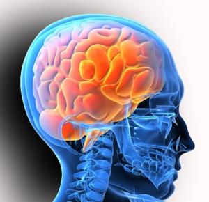 Неврологическая система.