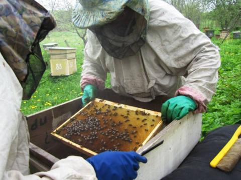 Пчеловоды в защитных сетка, чтобы насекомые на жалили в голову