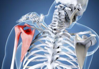 плечо и лопатка кости