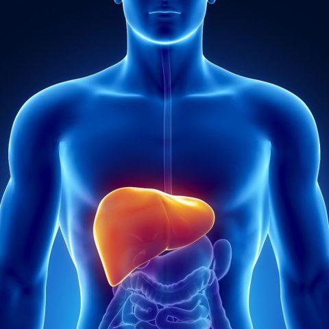 Регулярная чистка печени поможет предотвратить множество заболеваний и патологий.