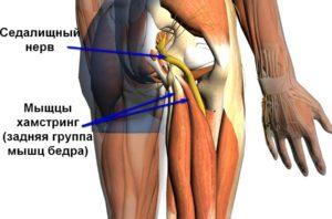 Нервы и мышцы