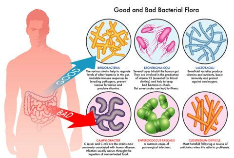 Препарат устанавливает правильный баланс между «хорошими» и «плохими» бактериями