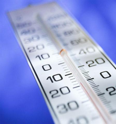 Комфортная температура для возбудителей - 20-25˚С