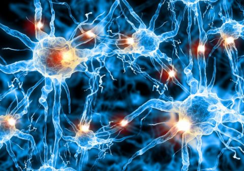 Вещество блокирует нервно-мышечную передачу
